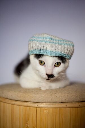 Very funny young cat wearing a hat and relaxing on a stool photo