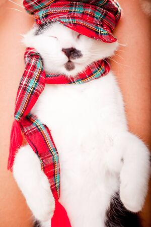 laps: Funny looking cat wearing a scarf and a hat and sleeping on owner s laps Stock Photo