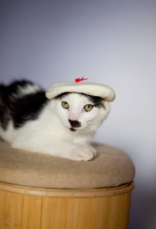Young european cat wearing a hat  Relaxing on a stool
