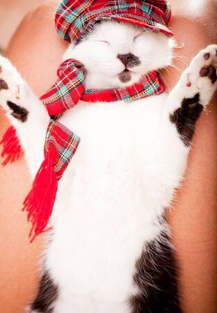 Lustige schauende Katze trägt einen Schal und einen Hut und schlafen auf Inhaber s Runden Standard-Bild - 17928952