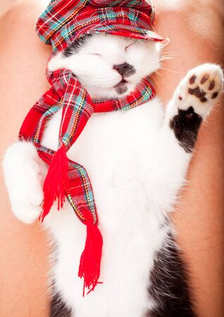 Funny looking cat wearing a scarf and a hat and sleeping on owner s laps photo