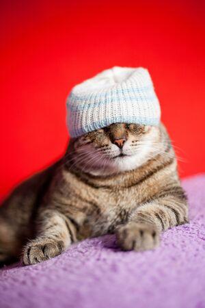 Adult Hauskatze trägt einen Hut