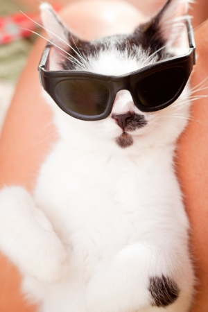 Young funny looking cat with sunglasses sleeping on owner s laps