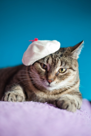 Funny domestic cat with a hat Standard-Bild
