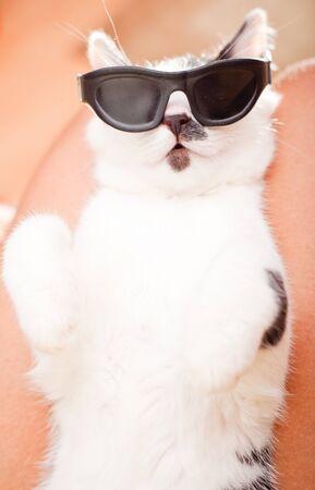 Young funny schauende Katze mit Sonnenbrille Schlafen auf Inhaber s Runden Standard-Bild