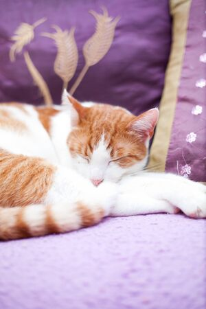 Adult ginger cat sleeping on a sofa  photo