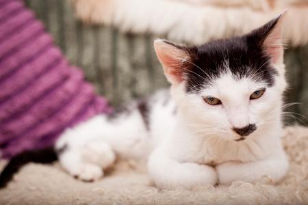 Lustige schauende junge Katze entspannt auf einem Sofa Standard-Bild