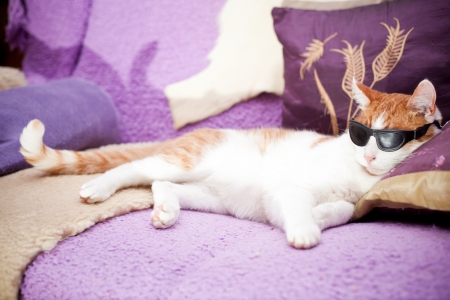 Funny ginger cat wearing sunglasses and realxing on a sofa