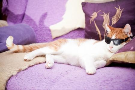 Lustige Ingwer Katze trägt eine Sonnenbrille und realxing auf einem Sofa Standard-Bild