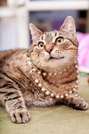 Europäische weibliche Katze trägt Halskette