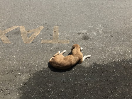 Brown stray dog resting on a taxi stop on the street during a sunny day