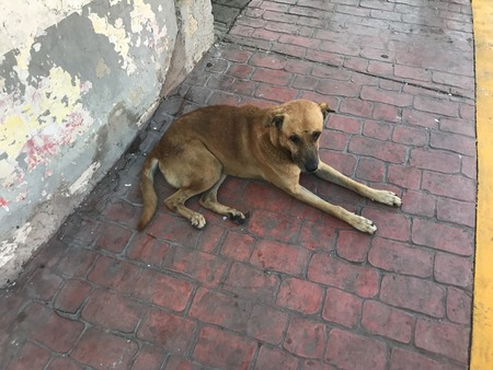 A dog on the sidewalk that is blocking the path and shows no intention to move Banco de Imagens