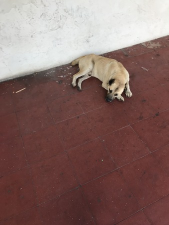 A dog resting on a red sidewalk near a white wall