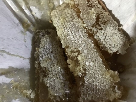 Bee honeycomb cut into pieces during the process of extracting the honey