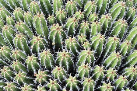 tangled vegetation of green cactuses with flowers 免版税图像