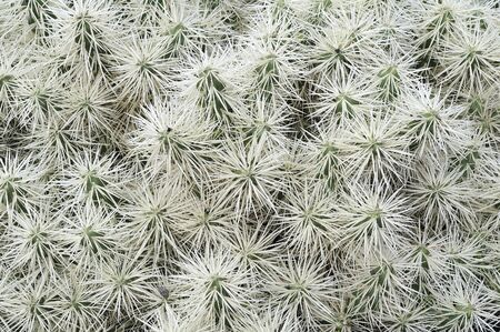 underbrush: tangled vegetation of green cactuses with flowers Stock Photo