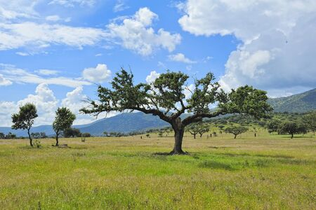 extremadura: typical landscape of Extremadura (Spain) Stock Photo