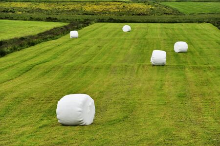 rolled silage bales in the meadow at Iceland Stock Photo - 12858911
