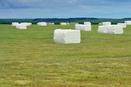 cuibic rolled silage bales in the meadow at Iceland photo