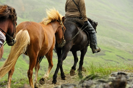 going on horseback in the mountains if Iceland