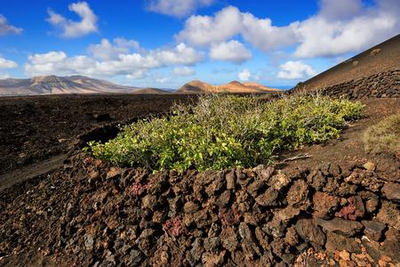 timanfaya: wild volcanic landscape at Timanfaya National Park, Lanzarote Island, Canary Islands, Spain