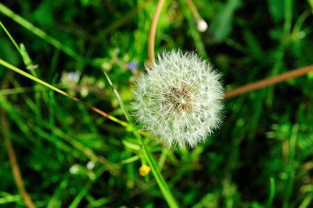 blowball: a blowball of dandelion Stock Photo