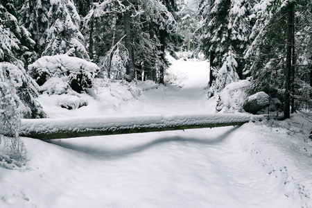 road in the forest in winter in the northwest of Russia Stock Photo