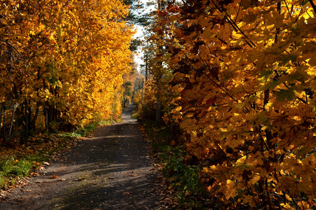 old empty soil road in the forest in autumn