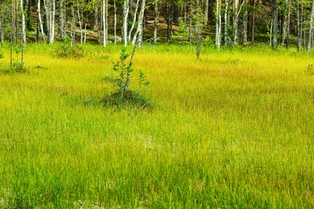 swamp forest and field landscape in the northwest of Russia
