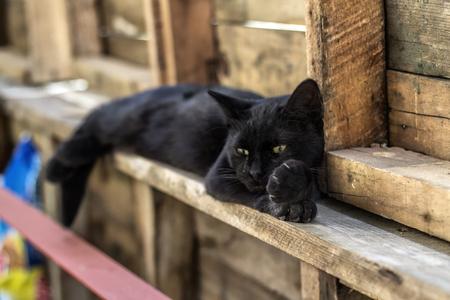 sunday cat