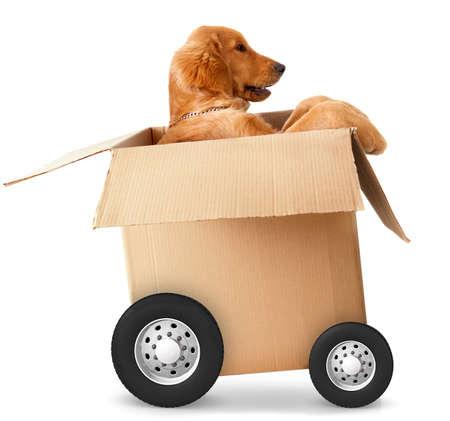 boite carton: Chien dans une voiture en carton - les concepts d'exp�dition rapide