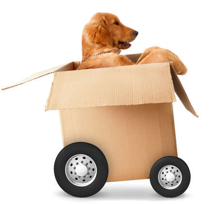 Dog in a car made of cardboard box - fast shipment concepts photo