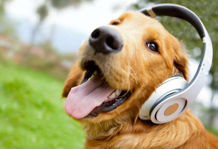 Cute dog listening to music with headphones - outdoors photo