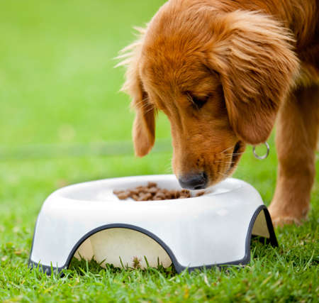 Cute dog at the park eating his food  photo