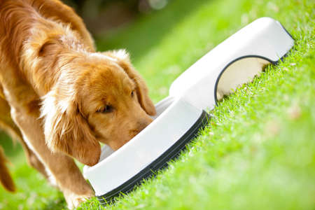 dog food: Cute puppy eating his food at the park
