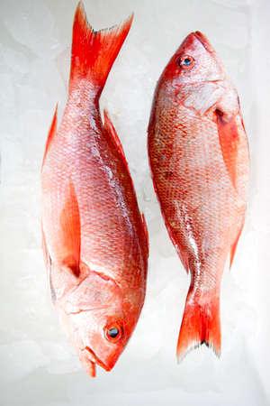 Couple of raw frozen fish on ice  photo
