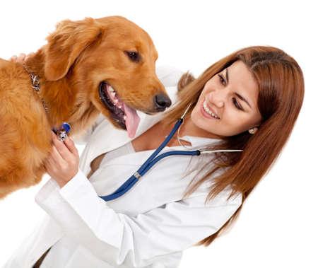 veterinario: Mujer veterinario comprobar un perro - aislar dover un fondo blanco