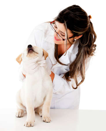 vets: Vet checking a puppy - isolated over a white background