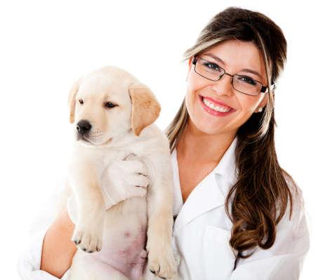 veterinaria: Vet sosteniendo un peque�o perro - aislados en un fondo blanco Foto de archivo