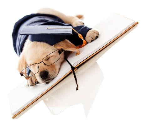 graduacion escolar: Graduaci�n perrito cansado de la escuela con un birrete