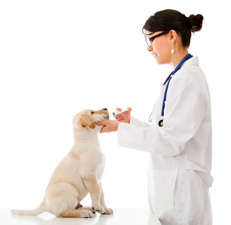 Vet giving medicine to a puppy in a syringe - isolated over a white background   photo