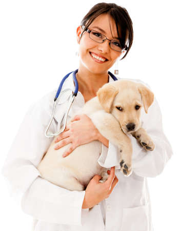 veterinary care: Vet holding a little puppy dog - isolated over a white background