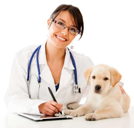 veterinario: Vet uso de la tecnolog�a con un peque�o perro - aislados en un fondo blanco Foto de archivo