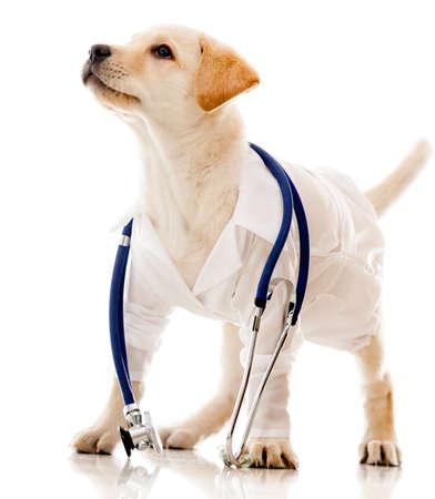 perros vestidos: Cachorro de perro vestido como un veterinario - aislados en un fondo blanco