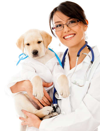 veterinary care: Puppy dog at the vet wearing a robe and stethoscope - isolated over white  Stock Photo