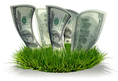 3D Hundred dollar bills growing in the grass isolated over white photo