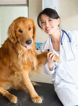 mujer con perro: Veterinario feliz celebraci�n de una pata de perro hermoso