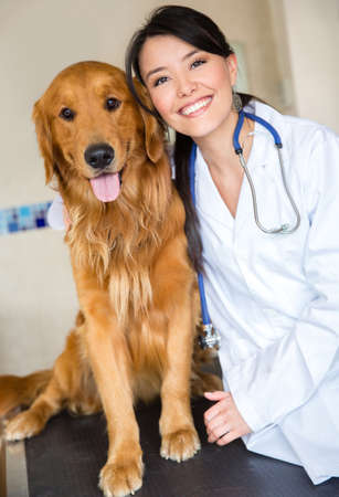dog health: Cute dog at the vet with a happy doctor