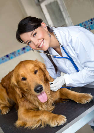Female vet doctor checking a dog with a stethoscope photo