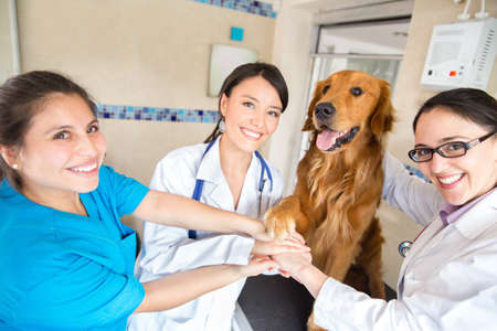 Teamwork at the vet with a group of doctors joining hands with a dog photo